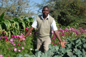 Border of beneficial plants alongside crop in Kenya