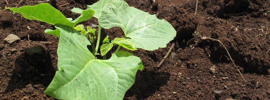 Resourceful farming on the Equator in Kenya