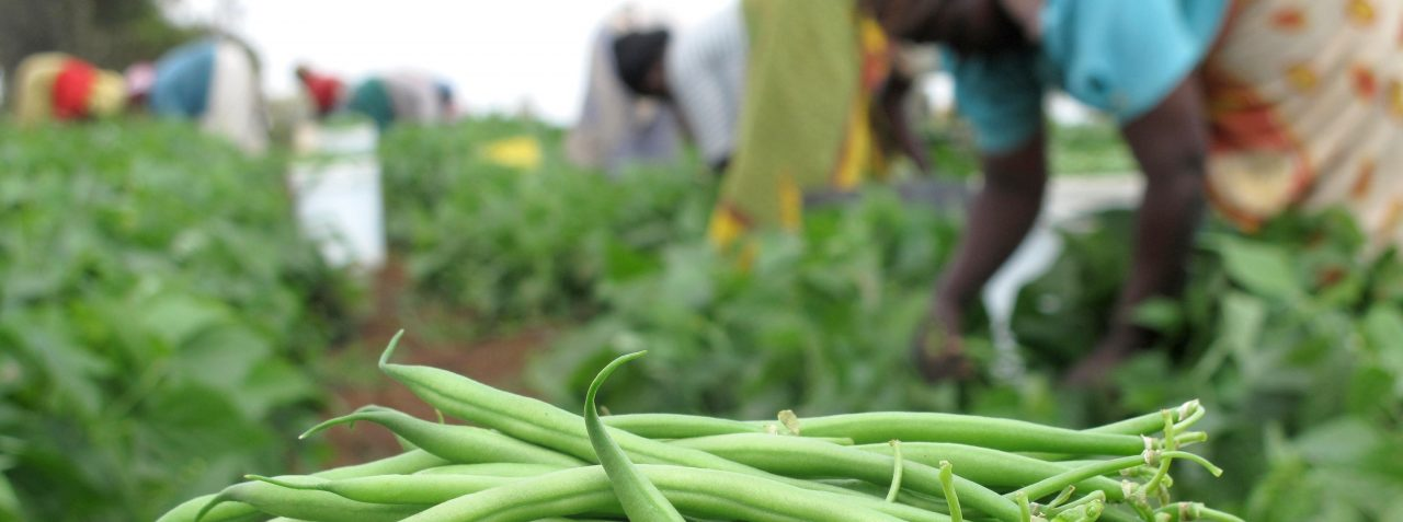 African Agri Study Tour