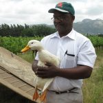 Duck Patrol to control slugs seen on Green Shoots AgriTour South Africa