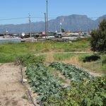 Urban farm Khayelitsha township