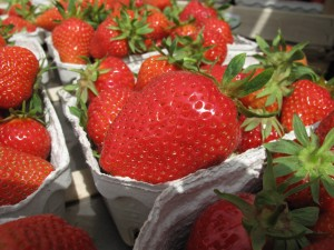 Fresh-picked strawberries ready to leave the farm