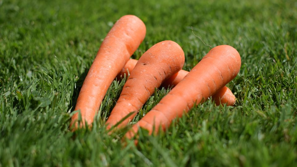 The carrot and stick for website security